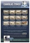 Charolais Power 2020 Edition Bull sale