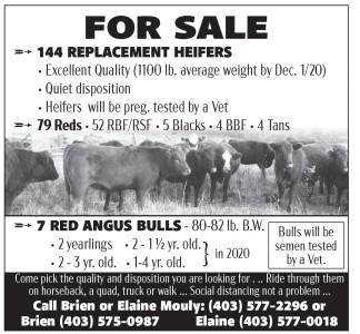 Bulls For Sale