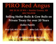 Selling Heifer Bulls & Cow Bulls on Private Treaty for over 20 Years
