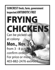 SUNCREST fresh, farm, government inspected ANTIBIOTIC FREE FRYING CHICKENS