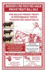 Beiseker & Red Rock Red Angus private Treaty Bull Sale